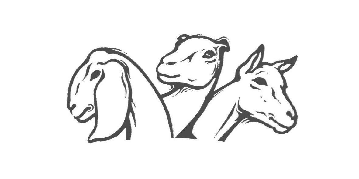 简单手绘羊头图片