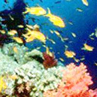 海洋生物研究所(广东省海洋生物技术重点实验室)