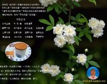 陈宗跃健胃消食排毒中药粉