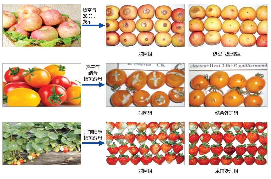 典型特色果蔬贮运及加工关键技术开发与应用图1