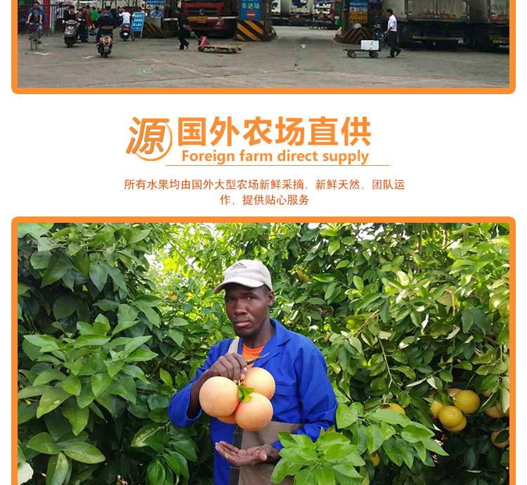 南非金豹西柚进口水果批发