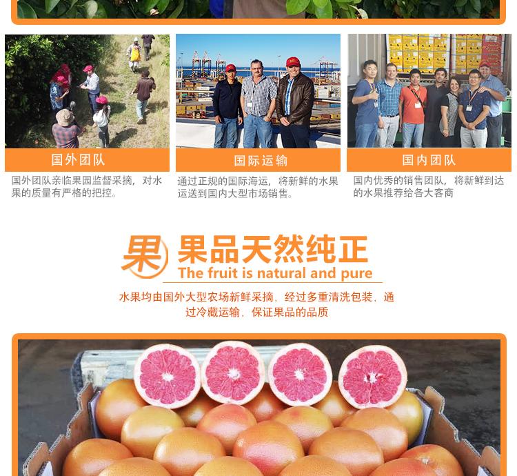 南非金豹西柚进口水果批发商
