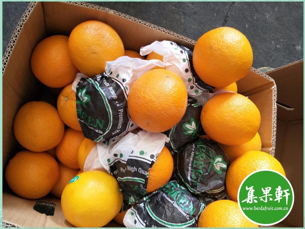 新鲜水果埃及进口夏橙Valencia 新鲜酸橙