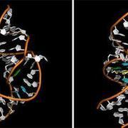 辽宁省生物技术与分子药物研发重点实验室