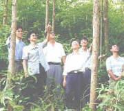 中南速生材繁育实验室